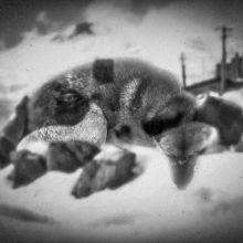 "Nazanin Mirzabeigi, From ""The Banished"" Series, Photomontage, Print on Photo Paper, 2016"