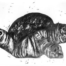 "Sara Abbasian, ""Cosmic Turtle #04"", from ""Imperishable Gravity"" series, pencil on cardboard, Diasec, 104 x 300 cm, unique edition, 2016"