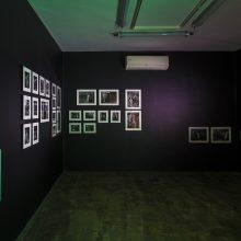 "Shirin Rezaee, From ""Decidophobia"" Series, Installation View, 2018"