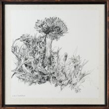 """Zahra Ghyasi, Dandelions"""", from """"Divergence"""" series, ink on chinese paper, 40 x 40 cm, 2020"""