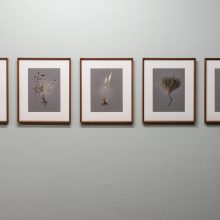"Gohar Dashti, ""Uprooted"" series, Factory 03, installation view, 2020"