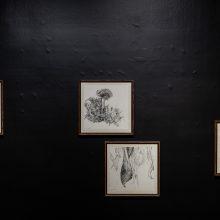 """Locus"" series, installation view, 2020"