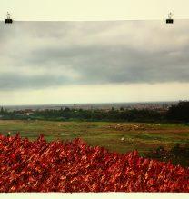 Mehdi Dandi, Untitled, Mixed media on photo, 50 x 70 cm, 2017