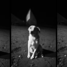 """FROM THE """"SENSIBLE"""" SERIES, CANSON BARYTA PHOTOGRAPHIQUE, 27×54 CM, 2012, 7 EDITIONS + 2 A.P"""