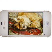 """Arya Tabandehpoor, untitled, from """"Animal"""" series, photo print on lightbox paper mounted on iphone 4 display module (additional wiring, iphone 4 casing, power adaptor), unique edition, 5.7 x 11.4 x 1 cm, 2011 – 2014"""