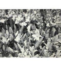 Mehdi Dandi, Untitled, Mixed media on plaster, 20 x30 cm, 2017