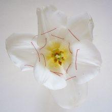 "Ursula Neugebaur, ""Bondage"" Series, Petals sewn with red thread, 12 photographs, 40 x 40 cm, edition of 3 + AP"