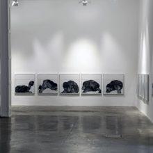 "Sara Abbasian, ""Imperishable Gravity"" series, installation view, 2016"